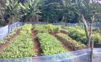 Copy of Lishe Bora family garden
