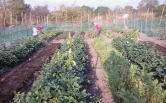 A family garden in Utete.