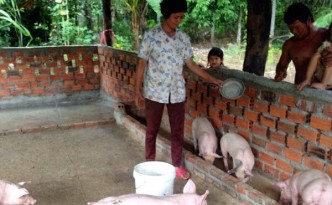 Pig business gives income to family 2
