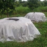Siem Reap Compost Pile
