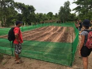 FAITH organic vegetable garden