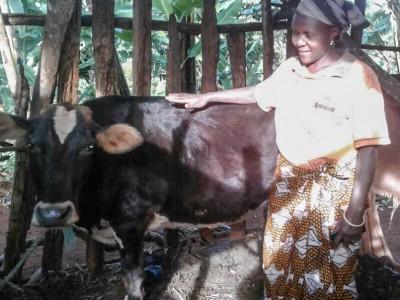 Eliza cow