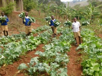 mukibogoye harvest