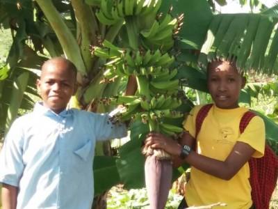 Maendeleo banana