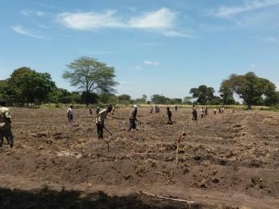Mwangaria Farming
