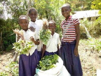 Mwangaria December Veg Harvest
